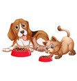 dog and cat eating vector image