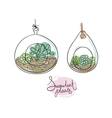 glass terrariums with succulents set vector image vector image