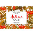 horizontal autumn sale banner foliage and frame vector image