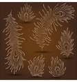 Peacock Feathers vector image vector image