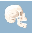 Human skull with open mouth vector image