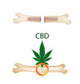 effect of cannabis oil on bones and fractures vector image