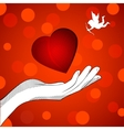 Heart cupid vector image