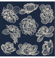 Peony drawings set vector image vector image