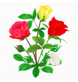 bouquet of rosebuds vector image vector image