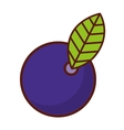 delicious fruit cherry isolated icon design vector image vector image