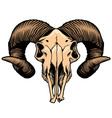 Goat head skull