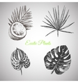 hand drawn tropical plants and exotic vector image vector image