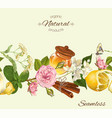 Herbal seamless banner vector image vector image