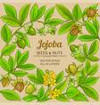 jojoba branches frame on color background vector image
