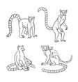 lemurs in contours vector image vector image