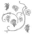 line art set grape plant vector image vector image