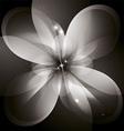 Star Flower vector image vector image