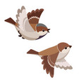 two flying house sparrows isolated vector image vector image