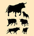 bulls silhouette vector image vector image