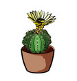flowering cactus in a clay pot element of home vector image vector image