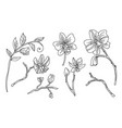 line art set orchid flower vector image