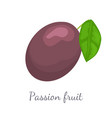 passionfruit with leaf exotic juicy fruit vector image vector image