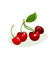 ripe cherries with green leaf sweet and tasty vector image