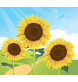 sunflower landscape vector image