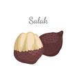 salak salacca palm tree exotic juicy fruit vector image vector image