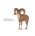 a cartoon urial with long curly horns isolated on vector image vector image