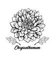 chrysanthemum hand drawn vector image vector image