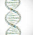 dna strand molecule vector image vector image