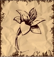 Lily flower isolated on vintage background vector image vector image