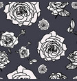 rose flower set of blooming plant garden rose vector image