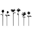 set of black flowers isolated on white vector image
