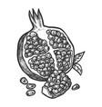 sketch pomegranate fruit hand drawn design vector image vector image