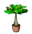 spurge plant in a clay pot element of home decor vector image vector image