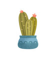 blooming cactus house plant elegant home or vector image vector image