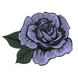 blue roseisolated rose single rose vector image vector image