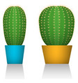 cactuses in colorful pots different forms white vector image vector image