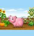 cartoon pig with farm background vector image vector image