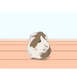 guinea pig sitting in a room vector image