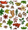Herbs And Spice Color Sketch Pattern vector image vector image