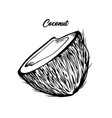 open coconut hand drawn vector image