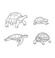tortoise and turtle in outlines vector image vector image
