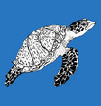 turtle hand drawn ink vector image vector image