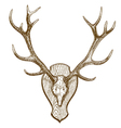 engraving deer skull with horns vector image