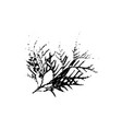 thuja tree leave silhouette plant and nature vector image vector image