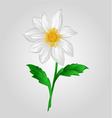 White Dahlia summer flower vector image vector image