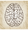Hand drawn - Human brain vector image