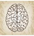 Hand drawn - Human brain vector image vector image
