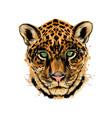 jaguar leopard head portrait from a splash of vector image vector image