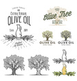 Olive oil labels and design elements vector image