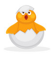 adorable newborn chicken in egg shell with piece vector image vector image
